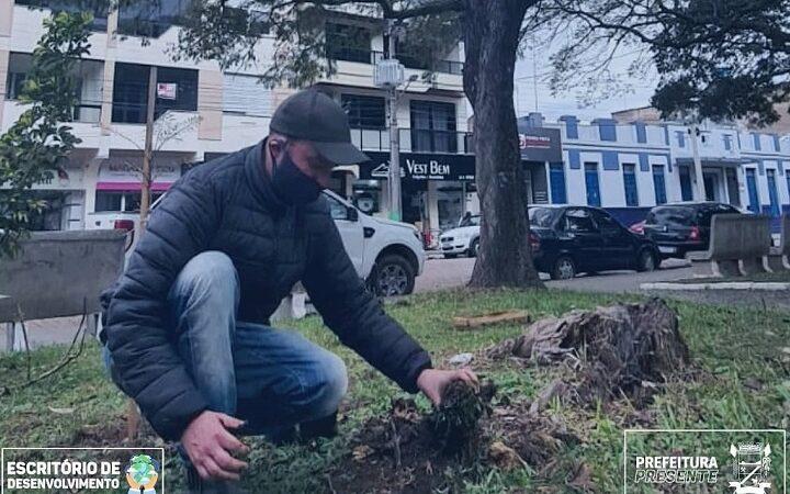 Administração Municipal vem investindo no plantio de árvores em São Sepé